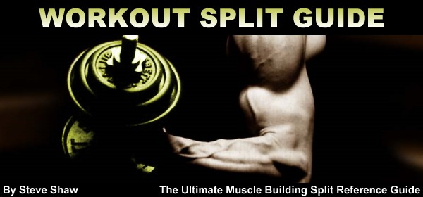 New - The Ultimate Muscle Building Split Reference Guide   Muscle & Strength Forums