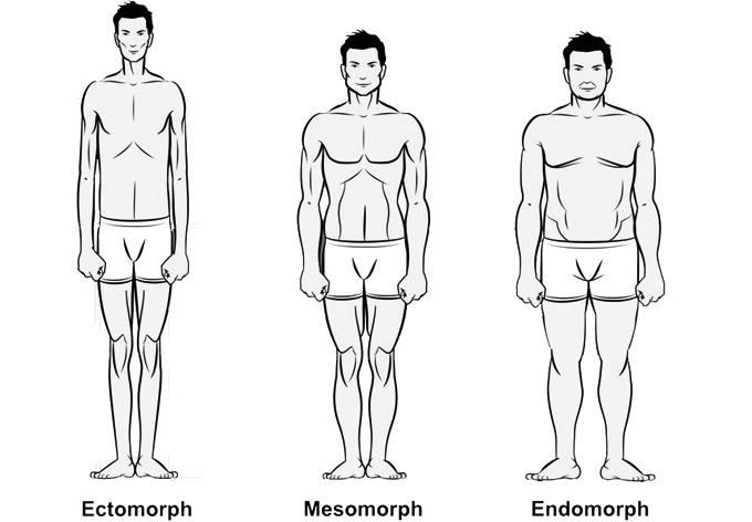סוגי הגוף