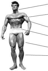 body measurements how to take body building